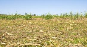 Plantation australienne de canne à sucre après récolte Images libres de droits