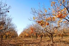 Plantation at autumn Royalty Free Stock Image