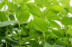 Plantation avec le vert intense de la végétation dans la nature image stock