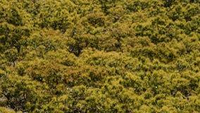 Plantation of avocados fruit tree stock video footage