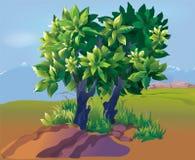Plantation Stock Image