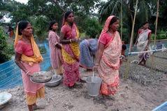 Plantation d'arbre dans Sunderban Photographie stock