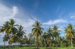 Plantation d'arbre de noix de coco Photos libres de droits