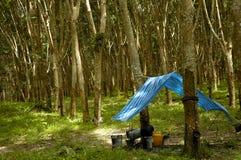 Plantation d'arbre en caoutchouc Photographie stock libre de droits