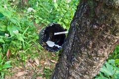 Plantation d'arbre en caoutchouc en Thaïlande Photographie stock