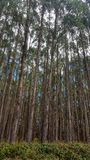 Plantation d'arbre en Tasmanie, Australie photos stock