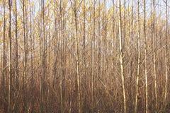 Plantation d'arbre près de Thuisbrunn en Suisse franconienne photo stock