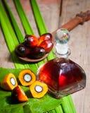 Plantation d'huile de palme Image stock