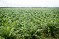 Plantation d'huile de palme Photographie stock libre de droits