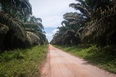 Plantation d'huile de palme Images stock