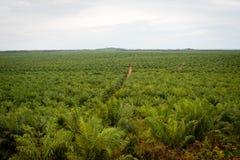 Plantation d'huile de palme Photos stock