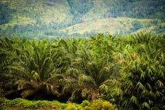 Plantation d'huile de palme Photos libres de droits