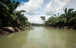 Plantation d'huile de palme Photo libre de droits
