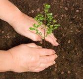 Plantation d'un arbre Images libres de droits