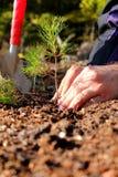 Plantation d'un arbre Photos libres de droits