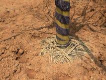 Plantation d'un arbre dans le sol photographie stock libre de droits