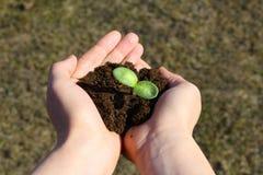 Plantation d'un arbre jeune photographie stock libre de droits