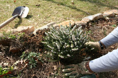 Plantation d'un jardin Photographie stock