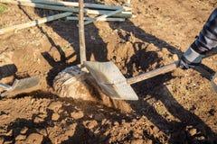 Plantation d'un jeune arbre à feuilles caduques ; un homme pelle la terre sur a images stock