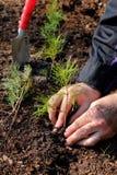 Plantation d'une forêt neuve Image stock
