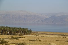 Plantation of the date palms near the Dead sea, Isr Stock Photos