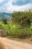 Plantation de bananier près de long village de Karen de cou, Thaïlande photos libres de droits