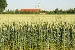 Plantation de céréales images stock