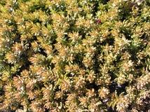 Plantation de cactus Photos libres de droits