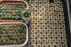 Plantation de cactus Photos stock