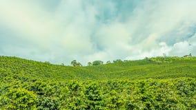 Plantation de café dans Jerico, Colombie images stock