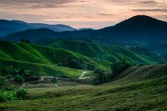 Plantation de Cameron Highlands Tea pendant le lever de soleil image libre de droits