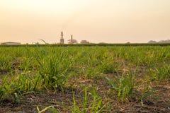 Plantation de coucher du soleil de canne à sucre Images libres de droits