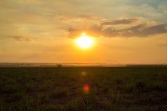 Plantation de coucher du soleil de canne à sucre Image libre de droits