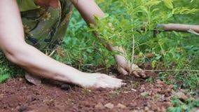 Plantation de femme pousses des fleurs dans le sol au jardin banque de vidéos