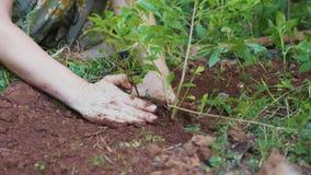 Plantation de femme pousses des fleurs dans le sol au jardin clips vidéos