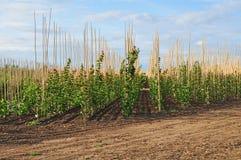 Plantation de ferme d'arbre Photographie stock libre de droits