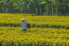 Plantation de fleur au Vietnam du sud images libres de droits