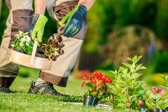 Plantation de fleurs de jardin images libres de droits