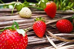 Plantation de fraise images stock
