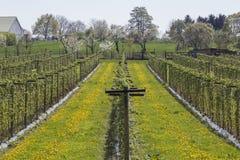 Plantation de framboise Photo libre de droits