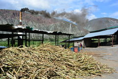 Plantation de kane de sucre à Mérida, Venezuela Image libre de droits