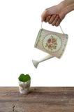 Plantation de l'amour dans le pot de fleurs Quand amour I né Image stock