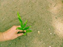 Plantation de l'arbre pour apporter une peu de modification Photos libres de droits