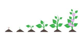 Plantation de l'arbre Usine de jardinage de jeune plante Les graines poussent en terre d'isolement sur le fond blanc Illustration illustration de vecteur
