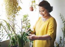 Plantation de la femme au foyer Activity Concept de croissance de plantation Images libres de droits