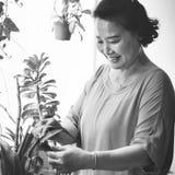 Plantation de la femme au foyer Activity Concept de croissance de plantation Image stock