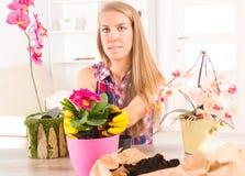 Plantation de la fleur de colorfull dans un pot de fleurs image libre de droits