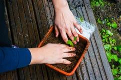 Plantation de la jeune plante Images stock