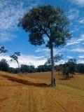 Plantation de maïs en Minas Gerais, Brésil photos libres de droits