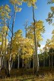 Plantation de montagne Photographie stock libre de droits